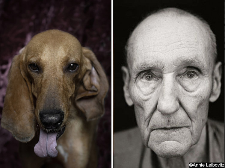William-S-Burroughs-ve-kopek-portresi